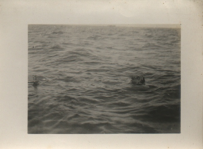 Channel swimmer Montague Holbein.